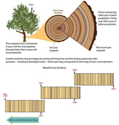 Dendrochronology-growth-ring