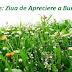 28 martie: Ziua de Apreciere a Buruienilor