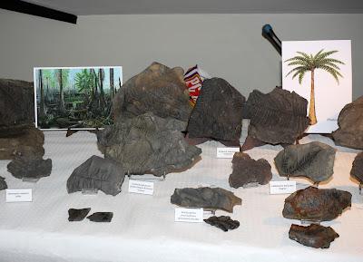 Exposición de fósiles del valle del Rubagón