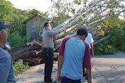Polsek Tirtayasa Bantu Evakuasi Pohon Tumbang yang Timpa Sepeda Motor
