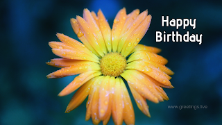 Beautiful birthday greetings card with flower