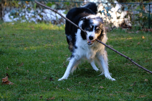 Bodger with a stick