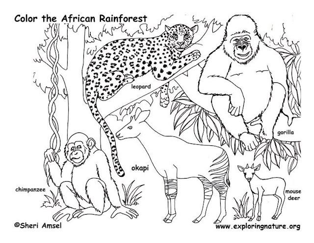 Coloriages a Imprimer : Coloriage animaux de la jungle