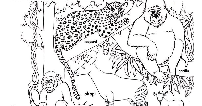 Coloriages A Imprimer Coloriage Animaux De La Jungle