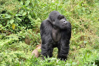 15 Days Safari in Uganda, Adventure & Wildlife Discover the pearl of Africa Uganda