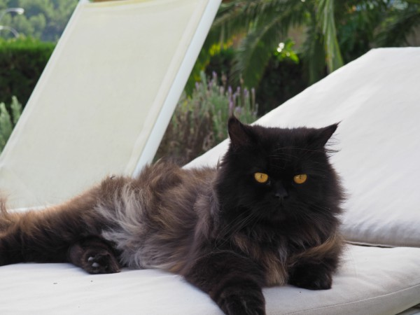 cat on sun lounger