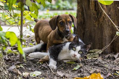 Pas i mačka Panvet blog