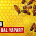 Arılar Nasıl Bal Yapar