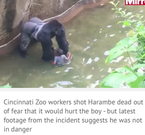 boy fell into gorilla pit ohio zoo