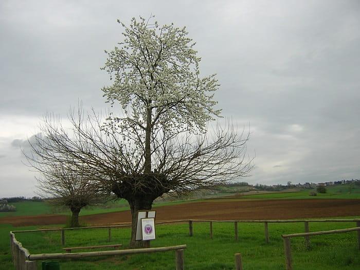 Bialbero di Casorzo - Italy's Double Tree