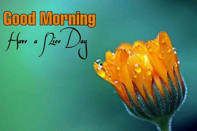 Awesome good morning image with nature yellow flower due drops have a nice day