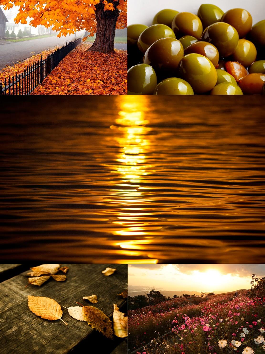 Analiza kolorystyczna: Jesień u Olgi