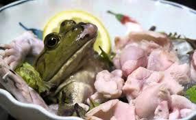 Sashimi Frog adalah makanan daging katak yang disajikan pada saat katak masih hidup
