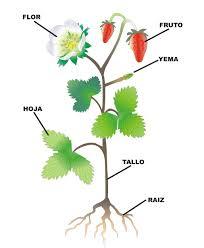 ANAYA_Partes de una planta,...
