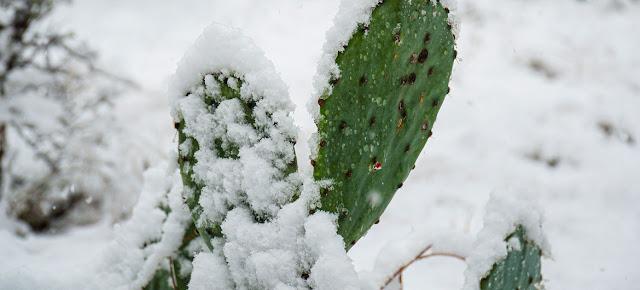 El estado estadounidense de Texas registró temperaturas inusualmente bajas en febrero de 2021.Unsplash/Thomas Park