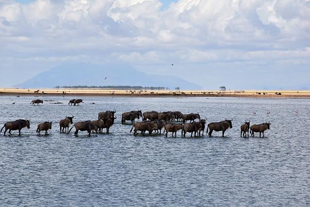 wildlife Kenya
