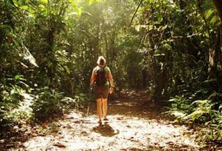 5 Fakta Mengagumkan tentang Pohon, Yuk Kita Jaga Kelestariannya!