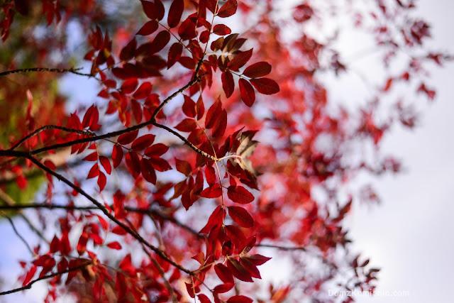 Kolory jesieni Toskania blog Dom z Kamienia