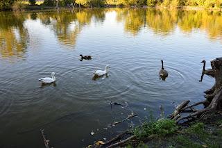 Ділянка «Комишуваха». Краматорський ландшафтний природний парк. Лебедине озеро