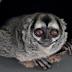 आखिर ग्रहण लगने के बाद जानवर क्यों करने लगते हैं अजीबोगरीब हरकतें? जानिए इसके पीछे की वजह