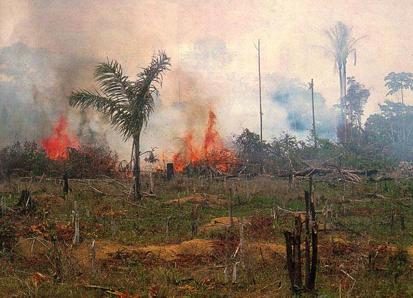 Risultati immagini per deforestazione foresta amazzonica
