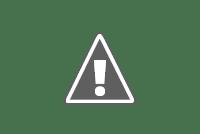 National tree of India - Indian banyan