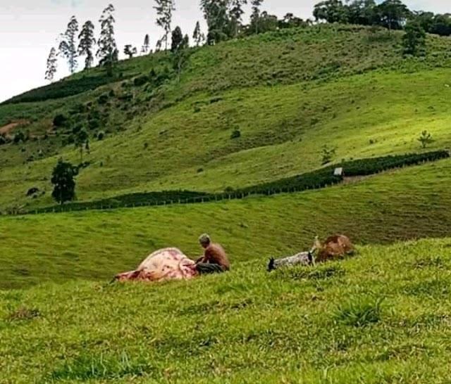 Homem é flagrado furtando gado, ataca policiais e acaba morto em Carangola