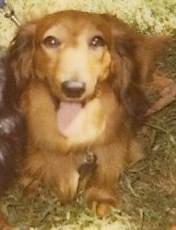 A Dog Named Solstice
