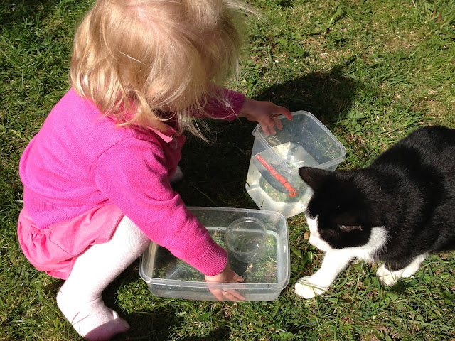 A toddler girl in the garden with a black and white cat