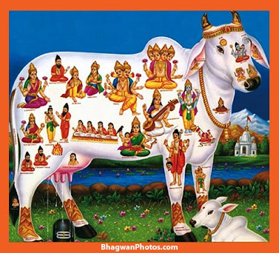 Gau Mata Beautiful Images