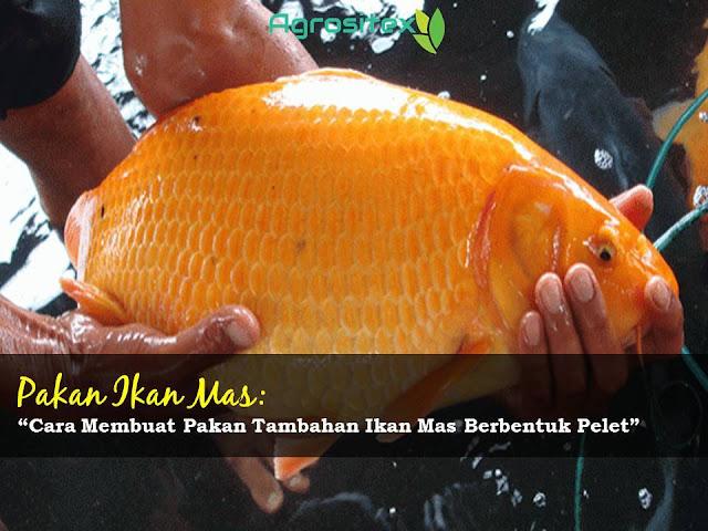 Cara Pakan Tambahan Pelet Ikan Mas