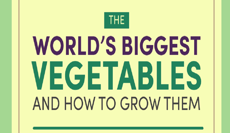 The worlds biggest vegetables #infographic