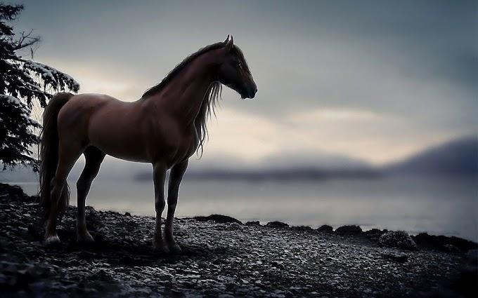 Atların Dünyası