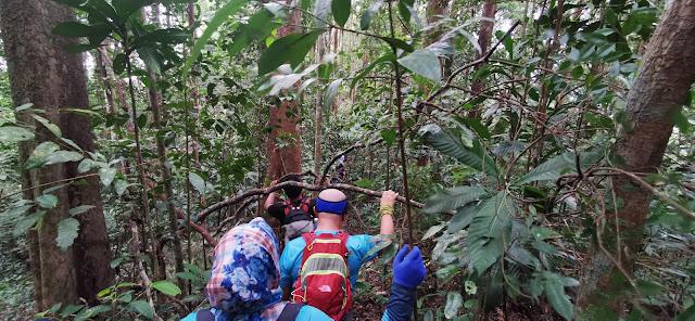 Loop Trail Sundang Hill - Mont Walker - Sundang Hill