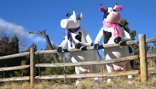 Vacas divertidas