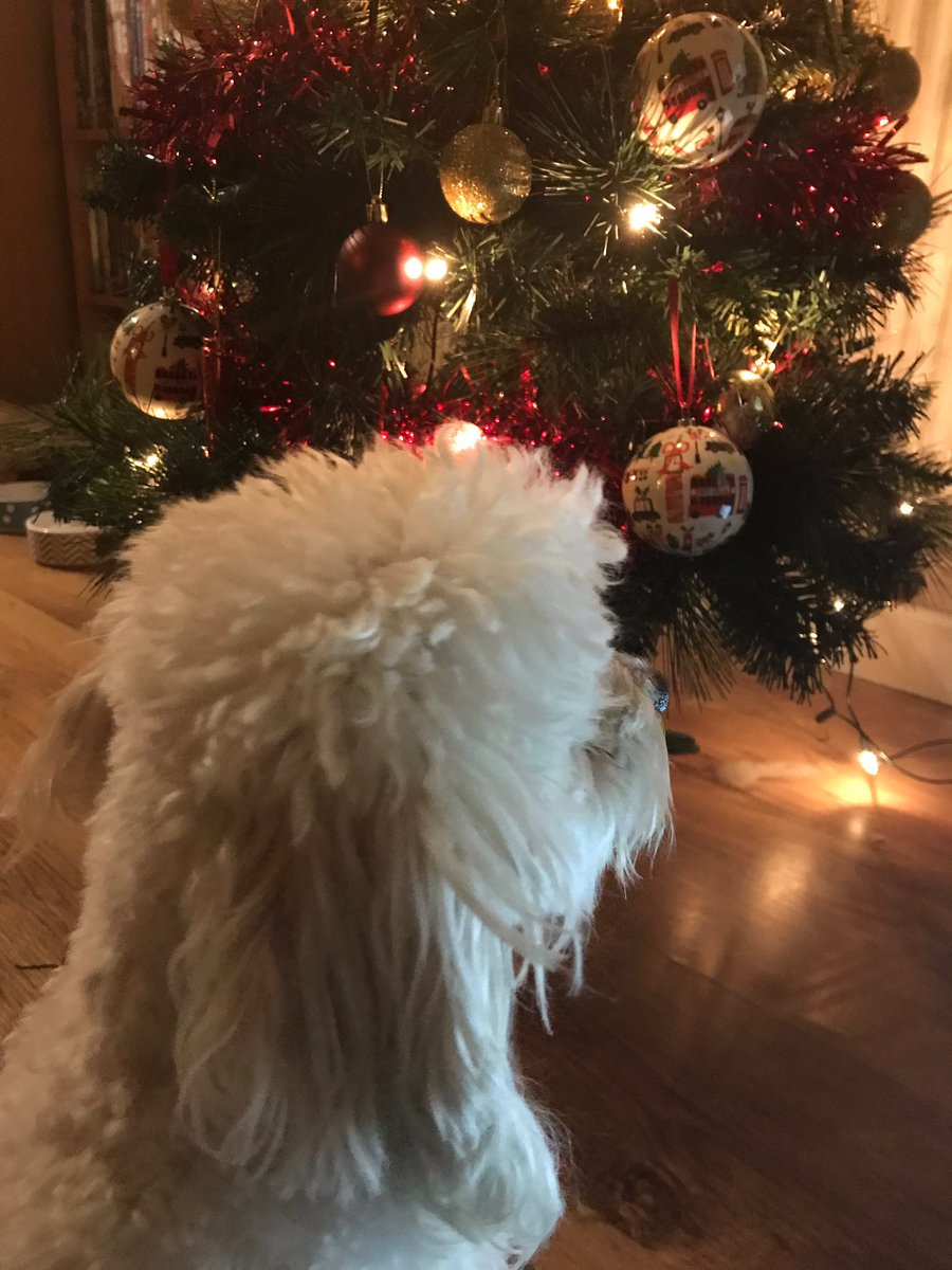 Bear sat in front of Christmas tree