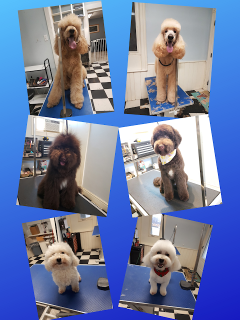 Before and After Dog Pictures