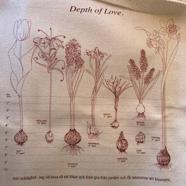 Planting spring flower bulbs guide