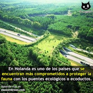 Países que tienen puentes ecológico para proteger la fauna silvestre.