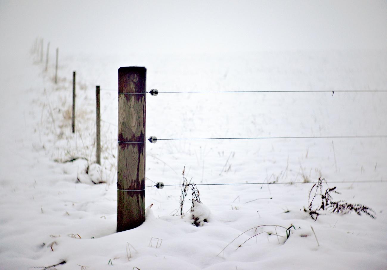 Bilder der Woche #50 (KW50/2020) – Schnee & Nebel
