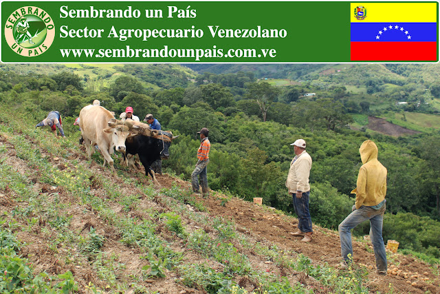 Sector Agropecuario Venezolano: