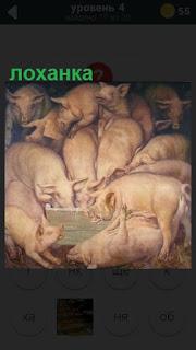 275 слов много свиней около лоханки с едой 4 уровень