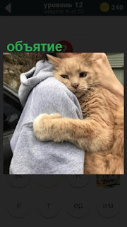 рыжая кошка на руках обнимает свою хозяйку