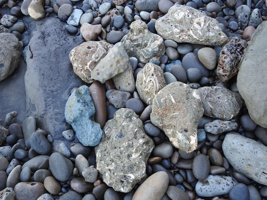 fossils NZ