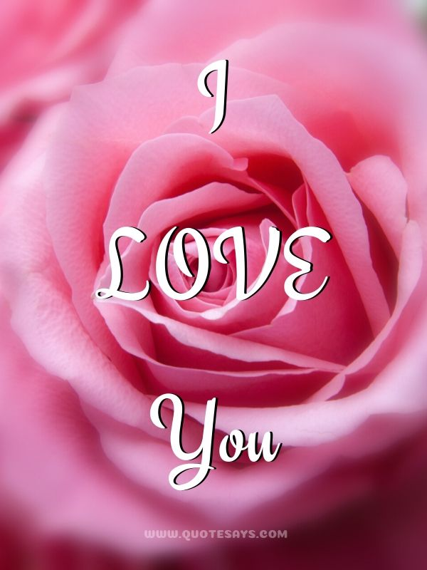 I Love You Images with  pink Rose
