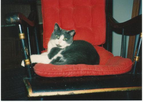kitten in chair