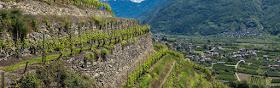 Vineyards of the Valtellina Lombardy