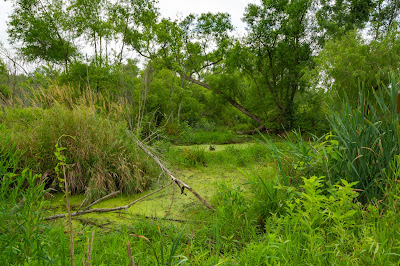Great Marsh Trail, Indiana Dunes National Park