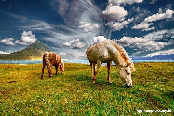 Sejarah dan Klasifikasi Kuda di Indonesia