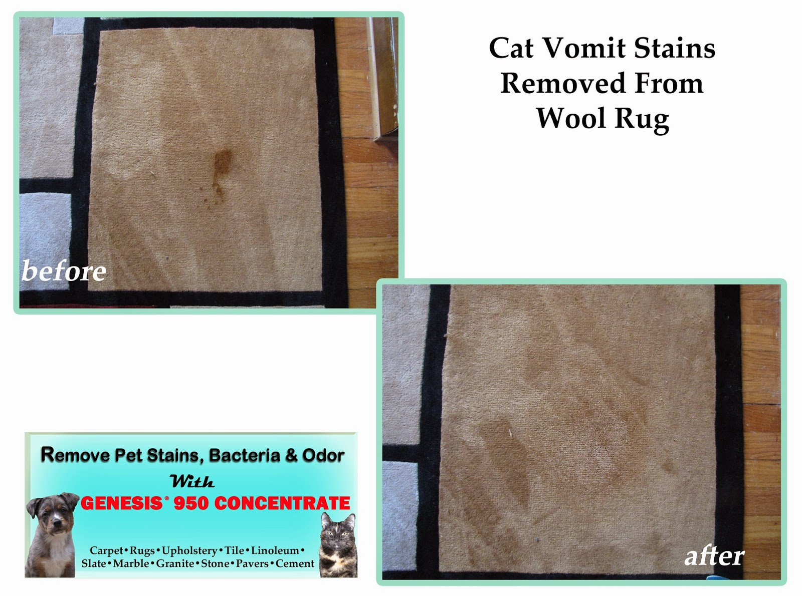 How To Remove Cat Food Stains From Carpet